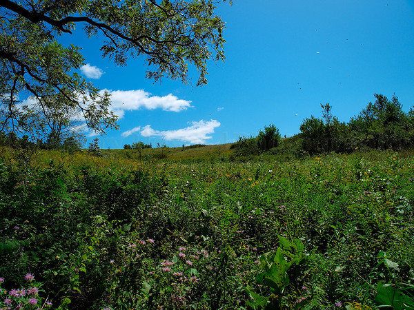 Rock Creek Prairie Land